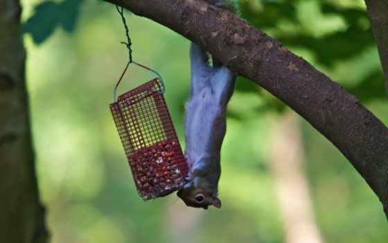 птица, feeder, this