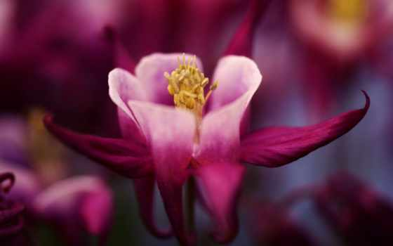 цветы, flowers, бордовый