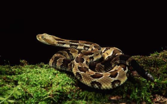 reptiles, fotos, imágenes