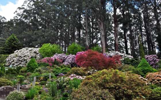 рододендрон, national, garden, olinda, gardens, австралия, фото,