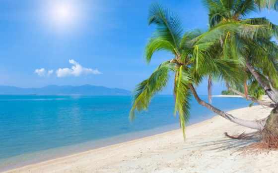 море, пляж, palm, пальмы, landscape, песок, берег, water, ocean, метки, небо,