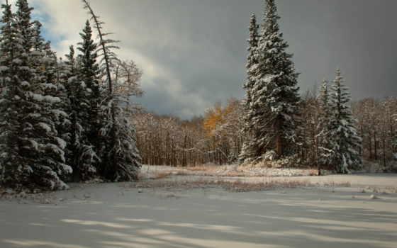 nieve, imágenes, fondos