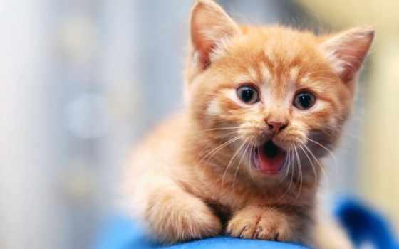кот, кошки, коты, her,