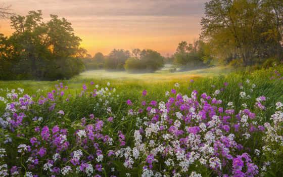 календарь, клип, природа, тюльпан, siam, toggle, мм