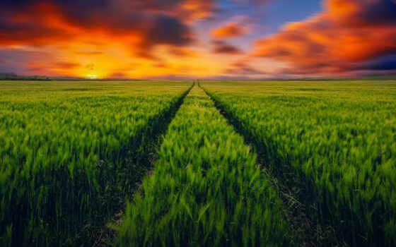 parede, поле, коллекция, вертикальный, ahmetshina, природа, papel, деревня, руслан, закат, трек