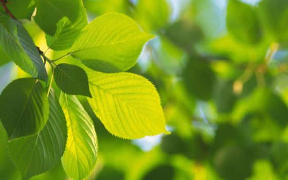 листочки, зеленые