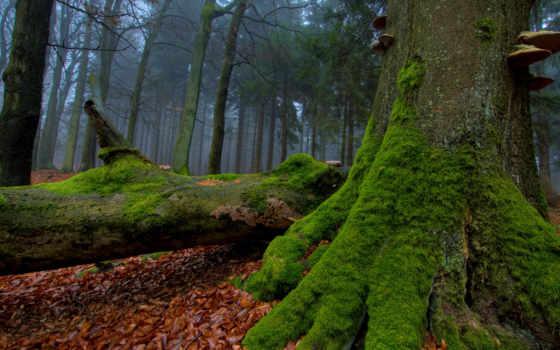 мох, деревья