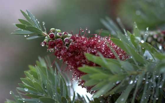 капли, rosa, росы, цветок, cvety, бутон, совершенно, категория, листья, утренней, капельках,