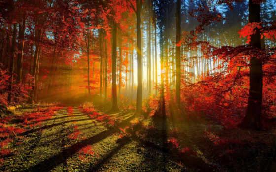 осень, лес, trees