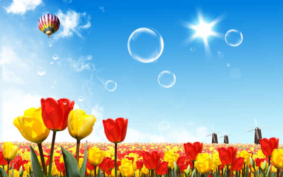 мяч, aerial, небо, небе, тюльпаны, sun,