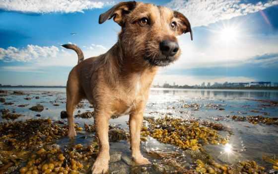 собака, breath, photography, kaylee, greer, dogs, об, boston,