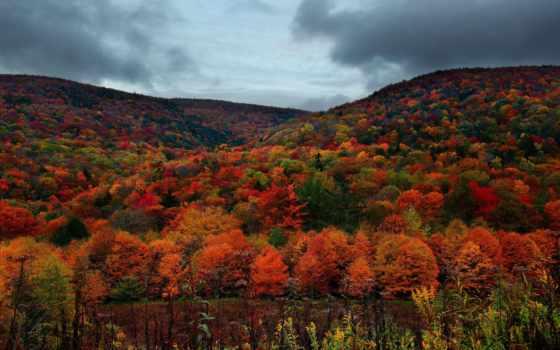 осень, лес, карпаты, горы, отдых, you, тучи,