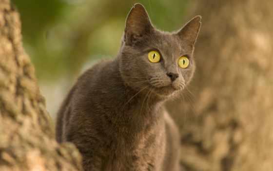 взгляд, zhivotnye, silmad, кошки, изображение, tasuta, tohutu, большие, kass, glance,