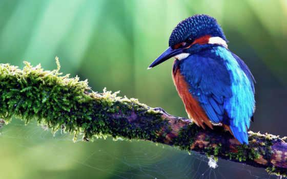 птица, птичка, тропическая, sit, дерево, окрас, птицы, ноября, красивая, птицами, скачай,