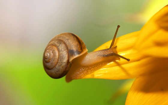 улитки, snail, насекомое, мэй, живут, суше, мантийная, полость, красивые, яndex, new,