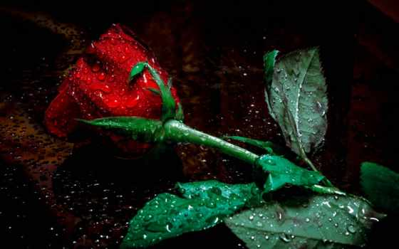 cvety, картинка, goodfon, цветы, макро,