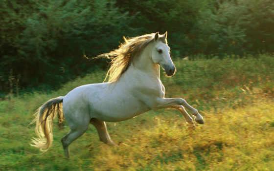 лошади, животные, лошадь