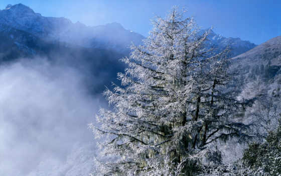 winter, природа, природы