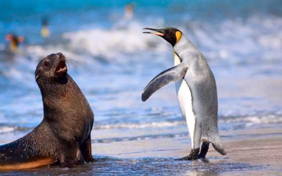 море, тюлень, пингвин