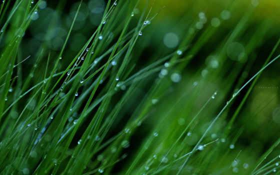 makro, трава, rosa, капли,