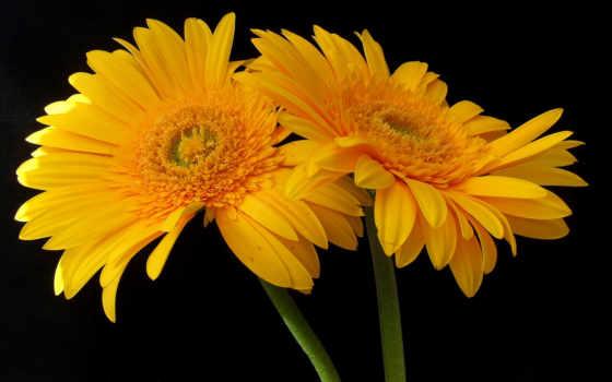 Цветы 100121