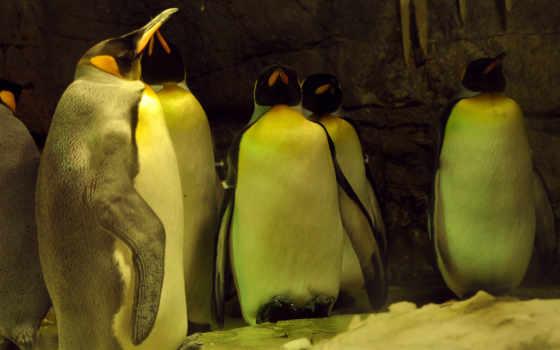 frases, para, fidelidad, lealtad, пингвины, misfrasetv, facebook, совершенно, etiquetar,