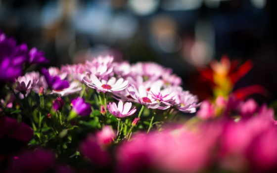 flowers, amazing, цветы