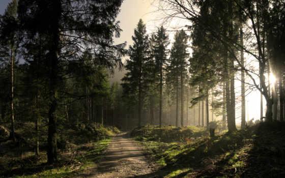 лес, eli, если, ёль, rays, дорога, trees,