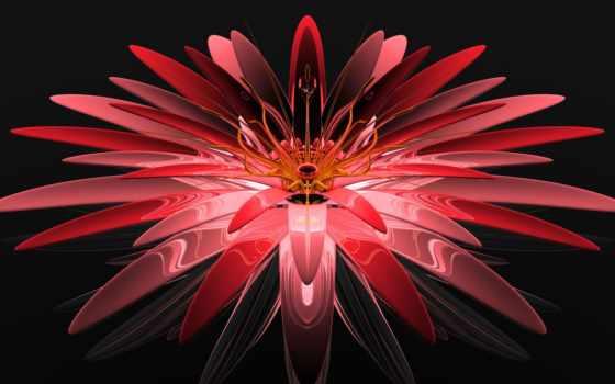 ,, красный, лепесток, fractal art, цветок, розовый, симметрия, гербера,