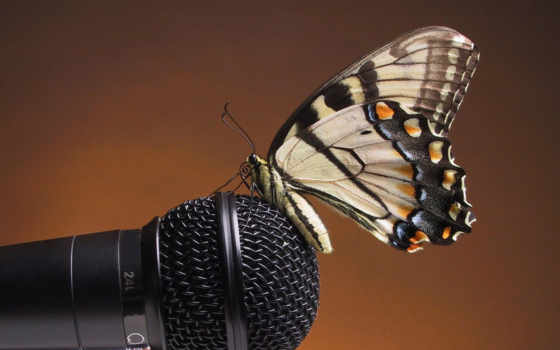microphone, landing, butterfly, sound, gentle, желтая, resolution, free, use, you, насикомое, butterflies, download, animals, tterfly,