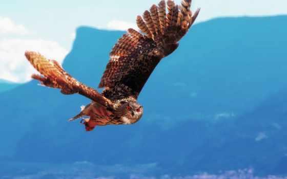 крылья, птицы, животные