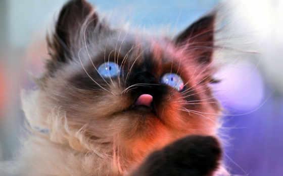 широкоформатные, смешные, коты
