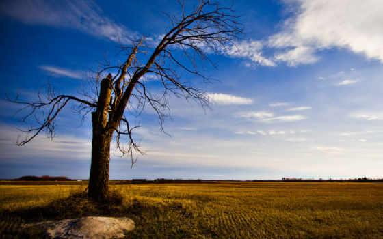 дерево, старое, одинокое, деревя, природа,