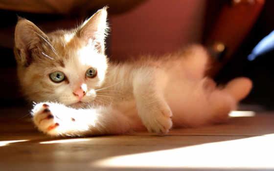 кошки, sun, кот