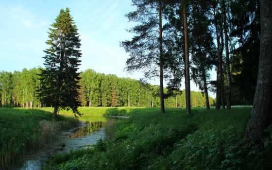 петербург, санкт, природа, павловск, landscape, природы, trees, парки, russian,