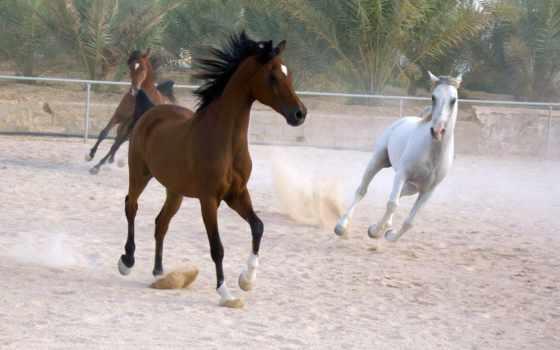 лошади, лошадь, страница, портал, noname, pic, zhivotnye, аватарки, египетский,