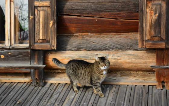 кот, коттедж, взгляд, кб, дневник,