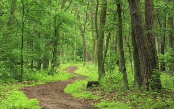 яndex, лес, леса, коллекциях, коллекция, пользователя, рисунки,