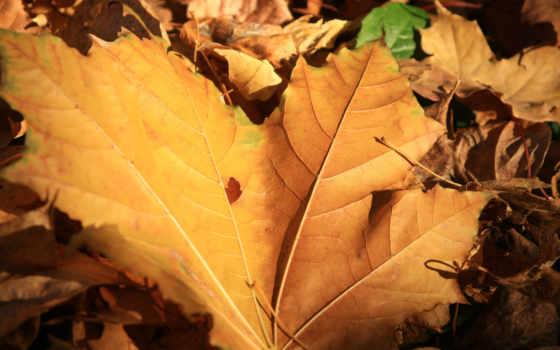 листва, осень, листики, желтые, блики, природа, мост, песню,