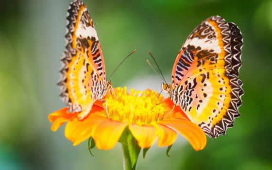 бабочки, посмотрите, коллекцию, яndex, коллекциях, мгпу, года, papillons,