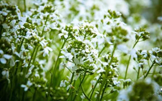 весна, cvety, другой, природа, summer, папоротник, трава