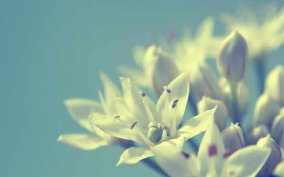 цветы, макро Фон № 19543 разрешение 1920x1200