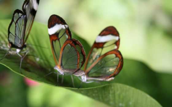 motyle, glass, tapety, kwiaty, zielone, liście, wings,