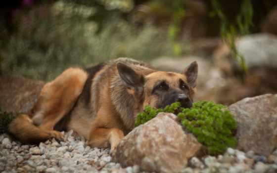 animal, собака, tapety, голову, wysokiej, разных, pulpicie, jednym, jakośc, które,
