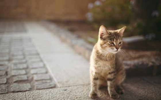 кошек, кот, украсит