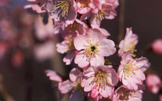 природа, вопрос, япония