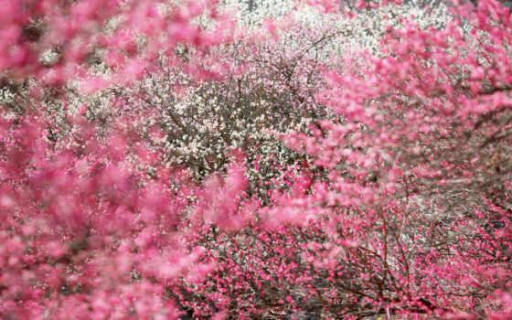 цветы, цвета, flowers