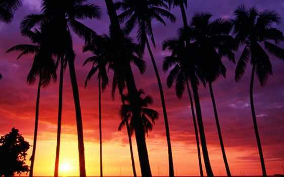 palm, закат, trees