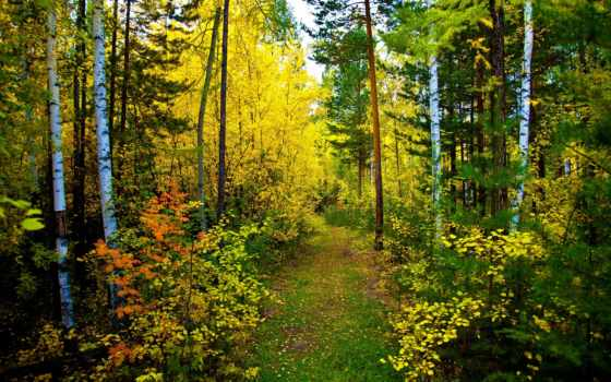 лес, осень, природа, trail,