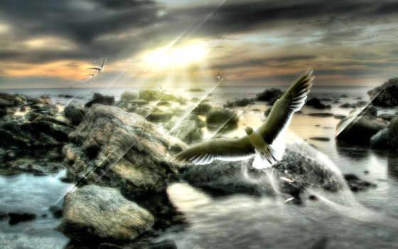 есть, дерево, море, dream, птица, всех, тег, которых, скалы,